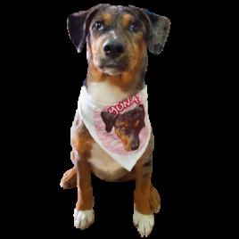 Pañoleta mascota